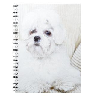 Perro maltés lindo cuaderno