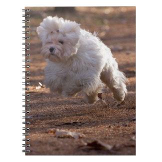 Perro maltés lindo libro de apuntes con espiral