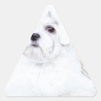 Perro maltés lindo pegatina triangular