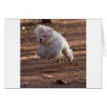 Perro maltés lindo tarjeta