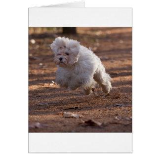 Perro maltés lindo tarjeta de felicitación