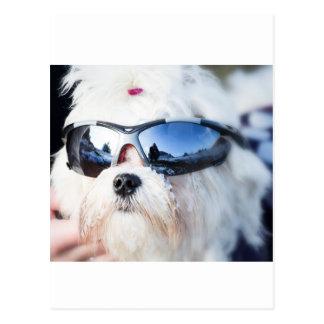 Perro maltés lindo tarjeta postal