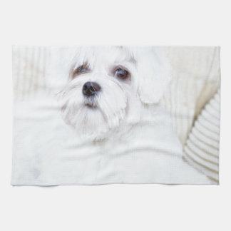 Perro maltés lindo toalla