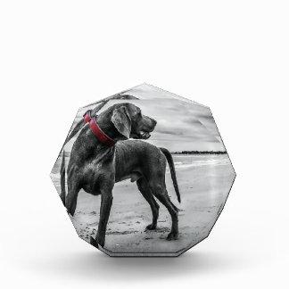 Perro maravilloso