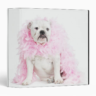"""Perro masculino blanco con la boa rosada carpeta 1 1/2"""""""