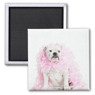 Perro masculino blanco con la boa rosada iman de nevera
