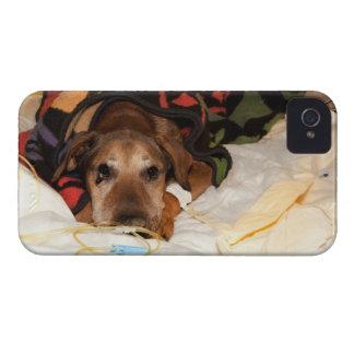 perro mayor en la Unidad de Cuidados Intensivos Carcasa Para iPhone 4
