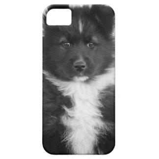 Perro mestizo, tiro del estudio iPhone 5 Case-Mate funda