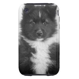 Perro mestizo, tiro del estudio iPhone 3 tough protector