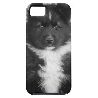 Perro mestizo, tiro del estudio iPhone 5 carcasas