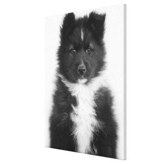 Perro mestizo, tiro del estudio lienzo envuelto para galerías