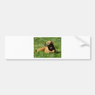perro, mezcla del pitbull/del boxeador pegatina para auto