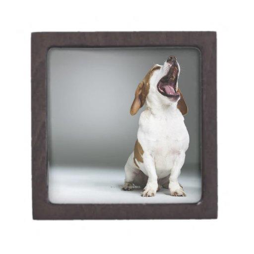 Perro mezclado de la raza que bosteza cajas de joyas de calidad