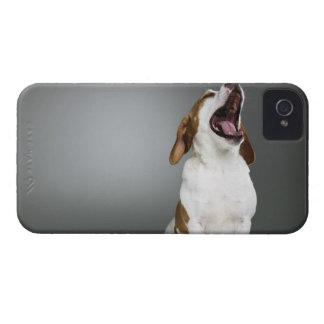 Perro mezclado de la raza que bosteza Case-Mate iPhone 4 cobertura