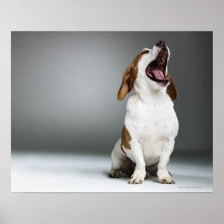 Perro mezclado de la raza que bosteza póster