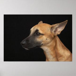 Perro mezclado de la raza que mira a la izquierda impresiones