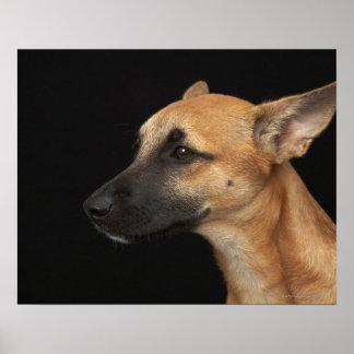 Perro mezclado de la raza que mira a la izquierda poster