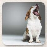 Perro mezclado que bosteza, primer de la raza posavasos