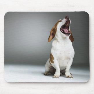 Perro mezclado que bosteza, primer de la raza tapete de ratones