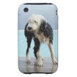 Perro mojado por una piscina funda though para iPhone 3