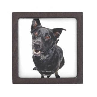 Perro negro cajas de regalo de calidad