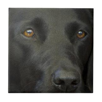 Perro negro de Labrador Azulejo Cuadrado Pequeño