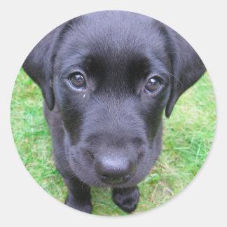 Perro negro de Labrador en hierba Pegatina Redonda