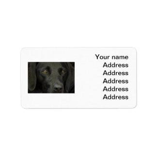 Perro negro de Labrador Etiqueta De Dirección