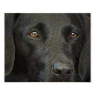 Perro negro de Labrador Fotografías