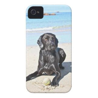 Perro negro de Labrador que se sienta en la playa iPhone 4 Case-Mate Cárcasas