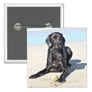 Perro negro de Labrador que se sienta en la playa Pin Cuadrado