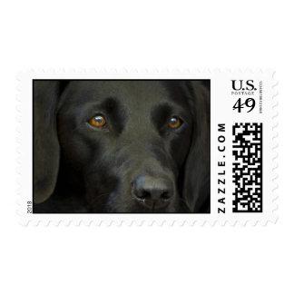 Perro negro de Labrador Sello