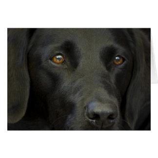 Perro negro de Labrador Tarjeta De Felicitación