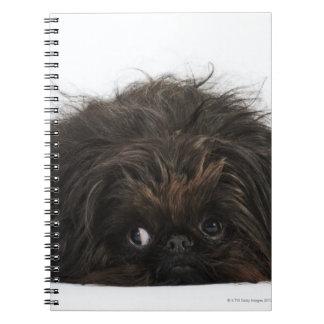 Perro negro de Pekingese que se acuesta Libreta
