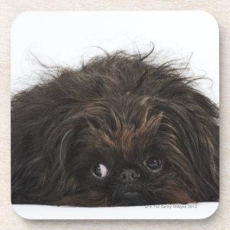 Perro negro de Pekingese que se acuesta Posavaso