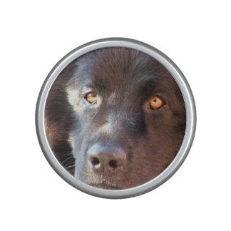 Perro negro de Terranova Altavoz