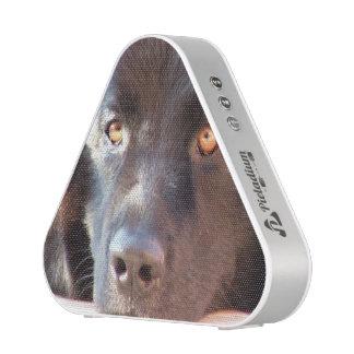 Perro negro de Terranova Altavoz Bluetooth