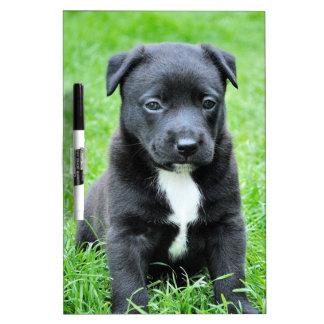 Perro negro del bebé pizarras blancas