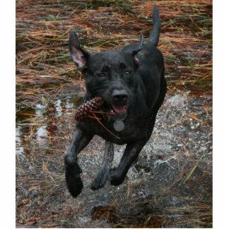 Perro negro del laboratorio con el funcionamiento  escultura fotografica