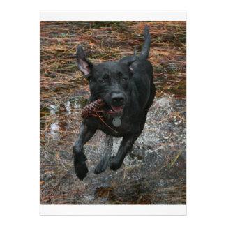 Perro negro del laboratorio con el funcionamiento comunicados personales