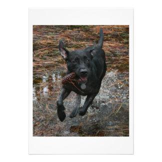 Perro negro del laboratorio con el funcionamiento invitacion personal