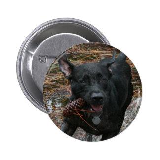 Perro negro del laboratorio con el funcionamiento  pin redondo de 2 pulgadas