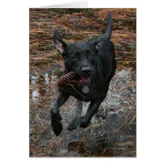 Perro negro del laboratorio con el funcionamiento felicitación