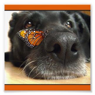Perro negro del laboratorio con la mariposa fotografías