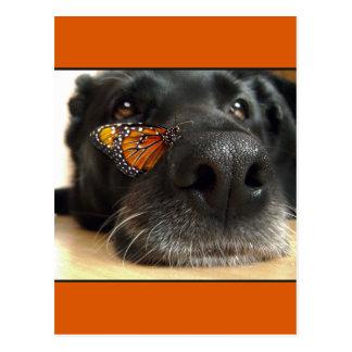 Perro negro del laboratorio con la mariposa tarjeta postal