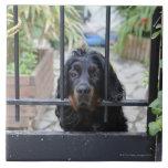 Perro negro detrás de la cerca, Bretaña, Francia Teja Ceramica