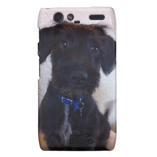 Perro negro droid RAZR carcasas