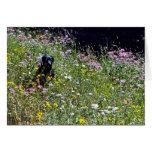 Perro negro en flores tarjetas