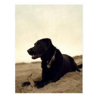 Perro negro en la arena con el palillo postal