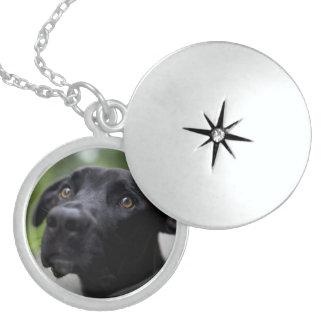 perro negro pendiente